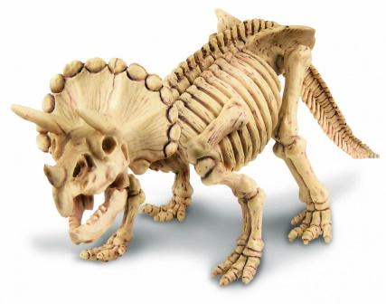 Картинки по запросу Скелет трицератопса
